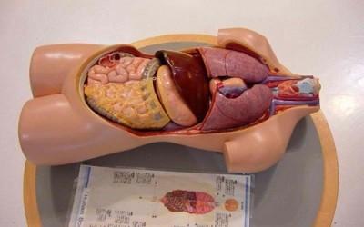Принуждение к трансплантации органов